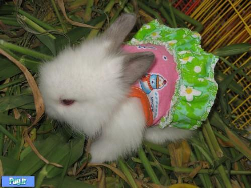 پرشین پت > > عکس هایی از بامزه ترین خرگوش های دنیا