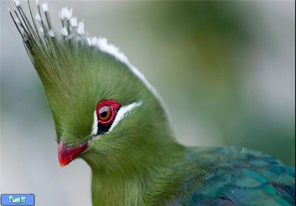 چسب پرنده بر چسب های مرتبط با کلیپ های جالب پرندگان