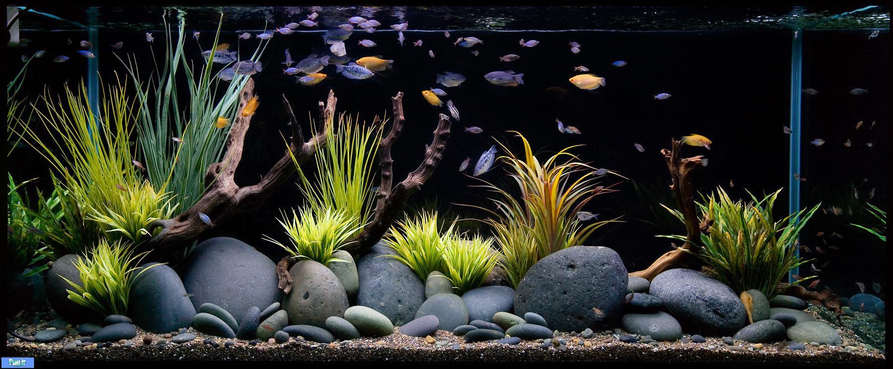 Дизайн в аквариуме своими руками фото