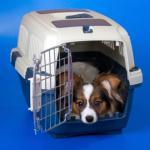 حیوانات خانگی بسیاری در سال 2011 جان خود را در پرواز های دلتا از دست دادند,اما چرا؟