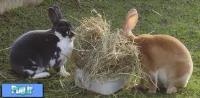 يونجه: یک غذای اصلی برای خرگوش ها (ترجمه)