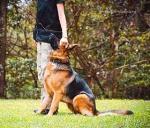 10 فرمان مهم در تربیت سگ