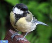 با زامبی پرندگان آشنا شوید
