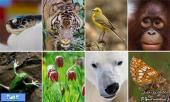 شعار روز جهانی تنوع زیستی در سال 2015 اعلام شد