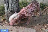 این حیوان بیگناه نتیجه ی آزمایشات انسان است