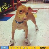سگی با احمقانه ترین چهره دنیا!