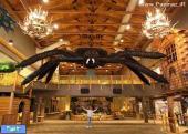 بزرگترین عنکبوت پرنده جهان