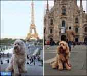سفر دور دنیا با سگ دوست داشتنی