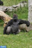 شگفت انگیزترین باغ وحش های دنیا
