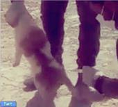 واکنش متفاوت بهرام رادان به سگ کشی در شیراز