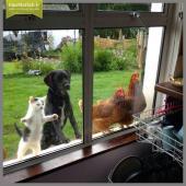 ژست جالب حیوانات پشت در