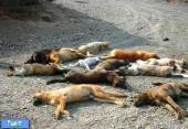 تشکیل پرونده علیه سگکشی با حمایت دادستان استان