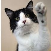 درمان گیاهی در گربه ها