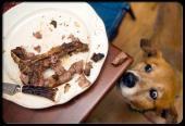 انواع مسمومیت های غذایی در سگ