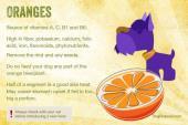 پرتقال برای سگ ها