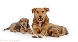 بیماری های گوارشی سگ ها 2