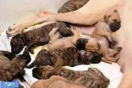 مراقبت از توله های تازه به دنیا امده در سگ ها