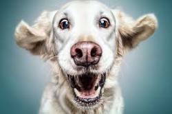استفراغ در سگ ها چرا و چگونه