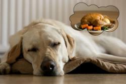 آیا سگها خواب می بینن؟