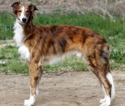 10 علامت خطرناک در سگ ها